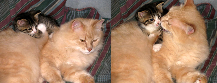 Catfish and Scout--feline companions