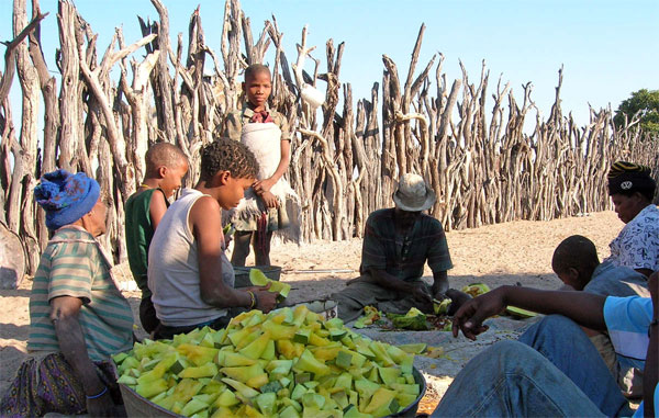 Bushmen of Kalahari denied water by Botswana and getting fluids from watermelons