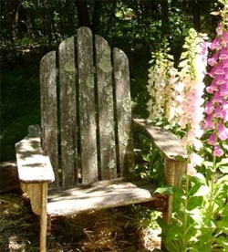 Cypress Chair with lichens