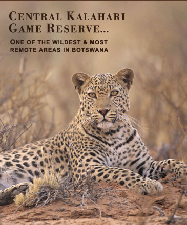 Kalahari wildlife