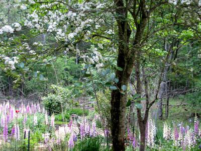 hawthorne flowers